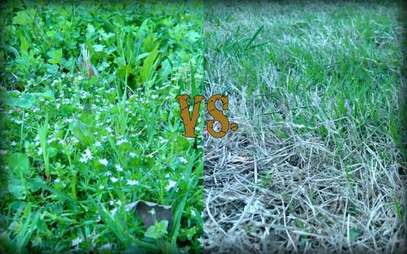 Weeds vs. Turf
